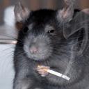 Крысиное Королевство