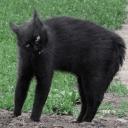 Сломанные коты